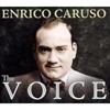 Picture of Enrico Caruso - The Voice